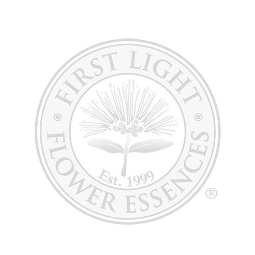 Blank Bottle with First Light® Flower Essence Treatment Bottle Label