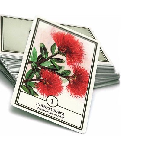 Flower Essence Cards No's 1-84 Boxed Set Large