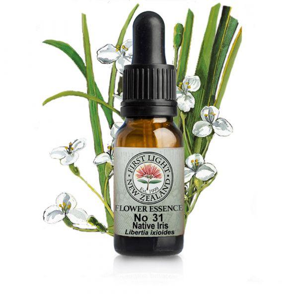 No 31 Native Iris