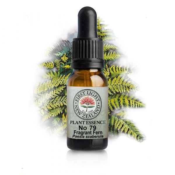 No 79 Fragrant Fern
