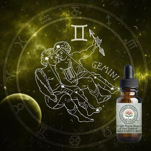 First Light® Gemini Zodiacal Blend
