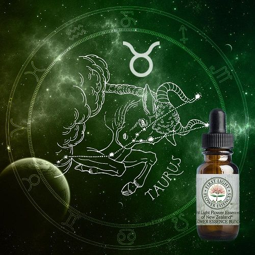First Light® Taurus Zodiacal Blend