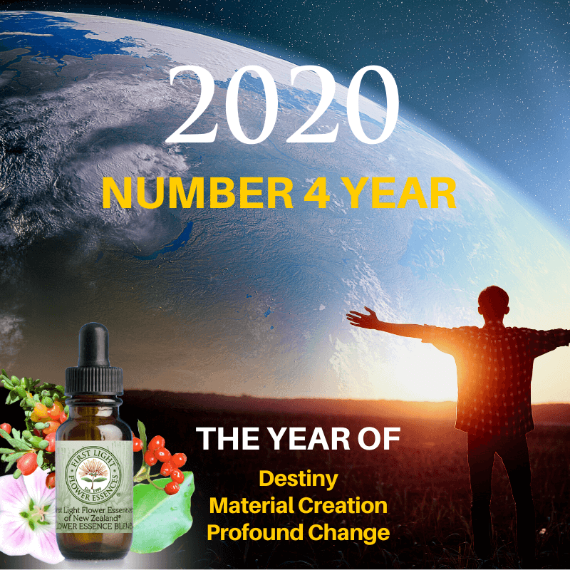 First Light® Flower Essence Blend for 2020 – The Number 4 Year